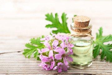 geranium essential oils for body odor