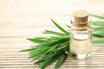 tea tree essential oils for body odor
